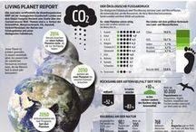 Infografik / Wissenswertes auf einen Blick