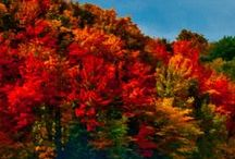 fall / by Gerry Brow