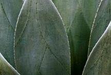 Arcadia / Botany and exoticism.  Peregrination  through baroque arcadia and utopias romantic gardens