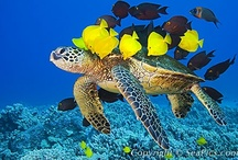 Marine life and stuff / by Karen Melbourne