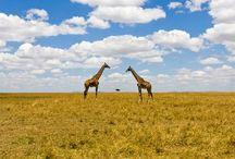 Animals / by Elizabeth jed