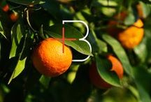Branch Design Studio | Creative Work / A collection of imagery by boutique design studio Branch. / by Shauna Haider