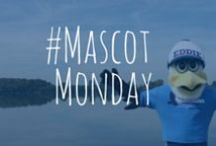 #MascotMonday / What is #MascotMonday? Simple. Every Monday we will share a photo of Eddie the Eagle (the credit union mascot) hanging out somewhere in the St. Louis metro area. Know where he is? Guess correctly on our Facebook page for a chance to win gift cards, swag, etc. Check it out! http://www.facebook.com/AmericanEagleCU