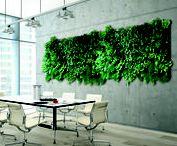 """Die grüne Wand / Die """"grüne Wand"""" ist der absolute Eyecatcher in Ihrem Gebäude. Sie ist individuell gestaltbar. Vom kleinen Blickfang hin zu meterhohen Konstrukten.  Sie kann mit unterschiedlichsten Pflanzen bestückt werden und ist deshalb immer einzigartig. Auch deshalb nennt man die """"grüne Wand"""" auch gerne """"Wandgarten"""". Gedike Begrünung berät und betreut Sie gerne bei der Planung, Umsetzung und Instandhaltung."""