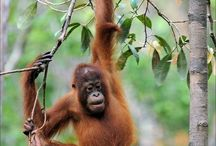 Explore: Borneo / Fantastic things to see and do on beautiful Borneo.  Because this beautiful planet deserves to be explored by you.