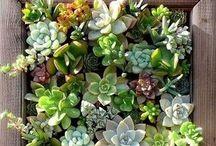 garden ideas / by Dina Legum Melet