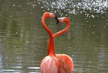 flamingo fun / Just cuz. I mean, who doesn't like flamingos? / by Dina Legum Melet