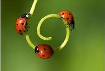 Ladybugs / by Nyla Parker