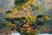 Trees i love / by Rosalie Cronin