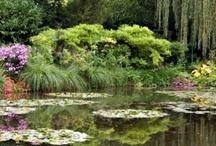 Favorite Gardens / by Rosalie Cronin