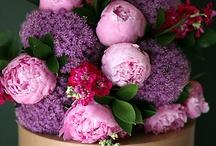 Just flowers / by Rosalie Cronin