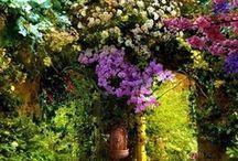 When I have a garden...