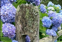 Garden/Yard Projects / by Rebecca Barclay