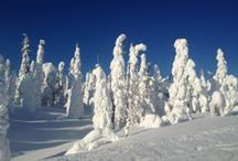 35. FINNISH WILDERNESS WEEK (CFA) / Relax in an unspoilt wilderness location. Explore two national parks and have all winter equipment included.