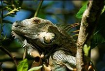 2. DISCOVER COSTA RICA (WUC) / Explore the jungles, mountains and coasts of this natural paradise.