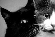 CATS | GATOS