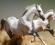 Pferde - Horses