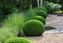 le jardin | puutarha  / by cascadia