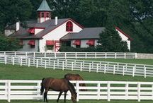 Lexington KY, The Horse Capital of the World. / I live near Lexington in Central Kentucky. Kentucky is the leader in the United States in the dollar value of its horses. They have $1.75 billion worth of horses and other equines that are bought and sold each year. The Kentucky Horse Park puts Lexington, KY on the world map because 34 national associations use the National Horse Center as their headquarters. Visitors from around the globe come to the Kentucky Horse Park and many international equine events are held there ever year.