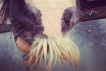 #moyourhorse / Join in the fun with our #moyourhorse competition Pin photos of your horse's moustache to win a £15 voucher for www.equestrianclearance.com  Horse got no mo? Print and cut-out your own by downloading this: http://bit.ly/1fBfTnu #moyourhorse