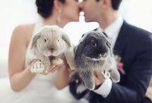 Ponpon Wedding