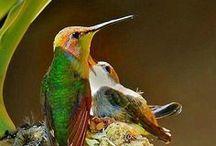 Különleges, szép és érdekes madarak / Mararak