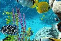 Óceánok,tengerek