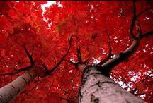 Colour love ... red / Red colour board