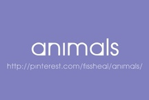 Animals / by fissheal manuel