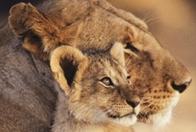 Fotografía de Animales