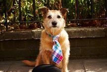 Terrific Ties and Links / Quality ties and accessories , for a finishing touch with flair