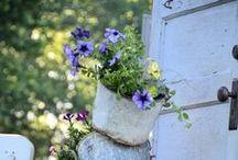 In The Garden / Inspiration for the patio garden.