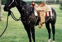 Dream Horse :0