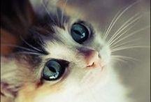 Pretty Animals