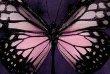 Vlinders + motten