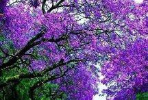 Trees / Hedges / Beautiful