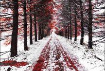 The 4 Seasons / Beautiful