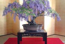 Bonsai Trees / ❤️ Lovely