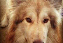 Native American Dogs / Beautiful