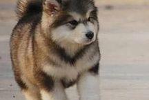 Puppies / So Cute