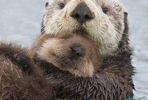 Otters / Cute