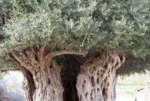 Tree Analogy - A Soul's Journey