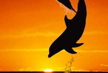 Dolphins:D