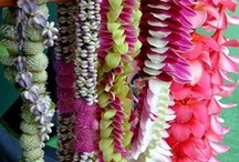 Maui Flowers and Plants / Enjoy some beautiful blooms from the island of Maui! / by Destination Resorts Hawaii