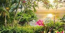 un petit endroit de paradis / la beauté des endroit les plus magnifique offre un spectacle haut en couleur