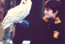 Harry Potter / A dream remains in my childhood.
