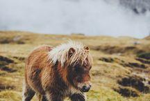 Horse / Krásní koně/Beautiful horses