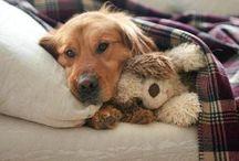 Animal loving