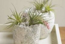 FLOWERS & PLANTS / Flower arrangements, Gardening and Plants, Easy to keep house plants & succulents.