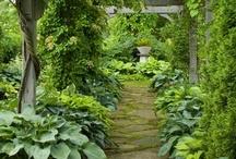 Garden / by Kalanikapua Padeken Mortensen